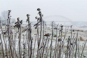 IJzel en Waalbrug bij Nijmegen