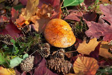 Herfst kleuren van Cornelius Fontaine
