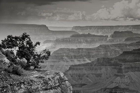 "#6 Grand Canyon, USA "" massieve vormen """