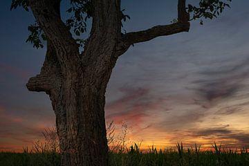 Baum und Sonnenuntergang von Norman Krauß