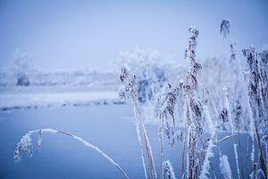 Winterlandschap Friesland. van