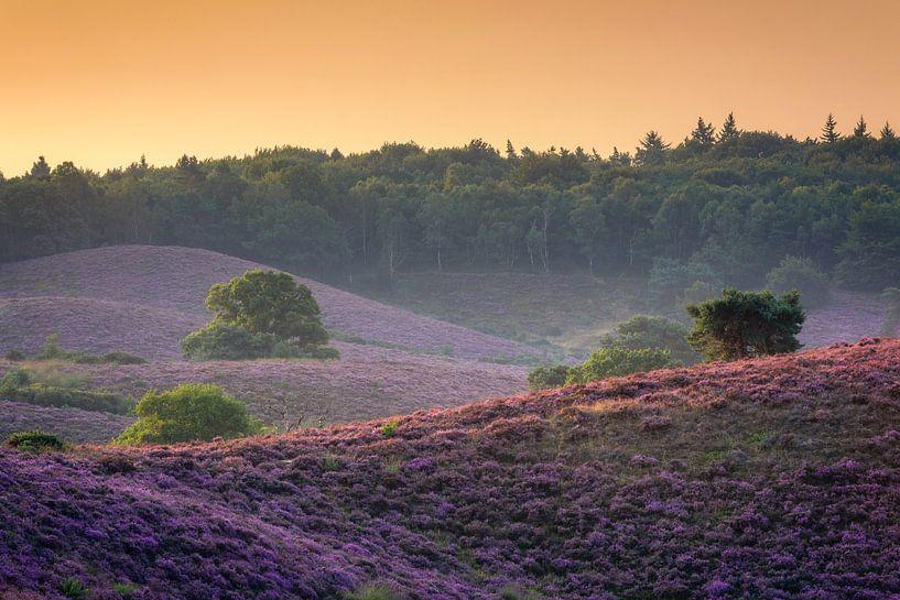 Paarse heuvels van Richard Guijt