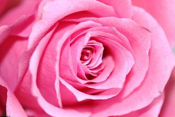 Liefde is met rozen