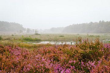 Un matin brumeux sur Johan Vanbockryck