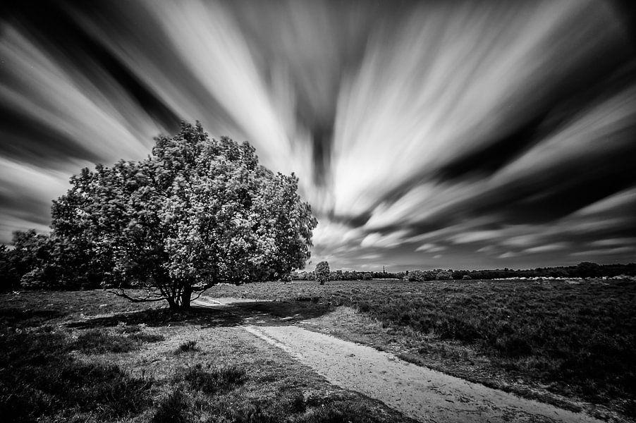 Eenzame boom op de heide van het Loosdrechtsebos  (Zwart-wit) van John Verbruggen