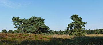 zwei fliegende Kiefern auf einem Heideland von Wim vd Neut