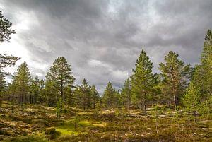 Natuurgebied Idre, regio Dalarna in Midden-Zweden van
