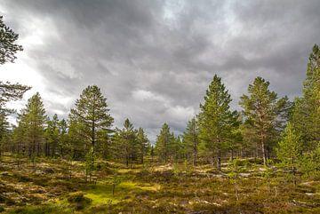 Natuurgebied Idre, regio Dalarna in Midden-Zweden von Margreet Frowijn