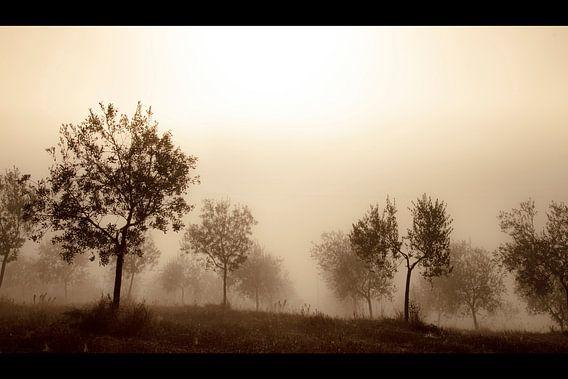 Olive Trees in the Mist van Manuel Meewezen