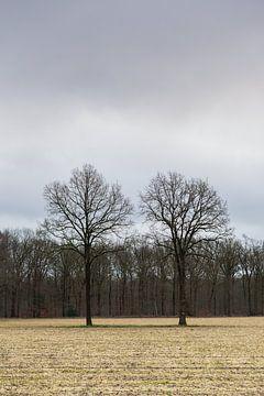 Winterlandschaft mit zwei kahlen Bäumen von Dick Doorduin
