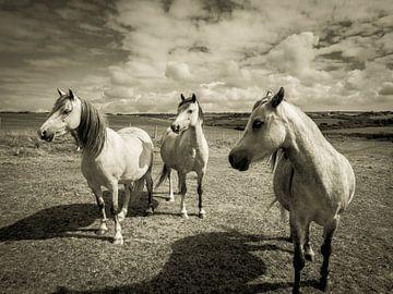 Pferde auf einer Weide, in Wales / Wolken / Grau / Schwarzweiß / Vintage / Fotografie / Kunst von Art By Dominic