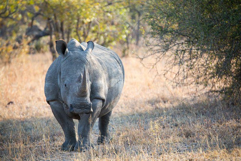 Rhino Portrait II van Thomas Froemmel