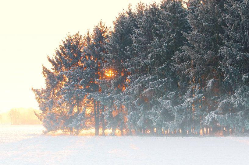Zonsopgang in de winter nevelwoud van Tanja Riedel