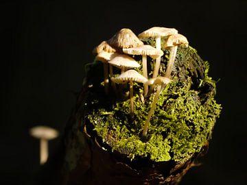Padenstoelen op een boomstammetje van Laura Pickert