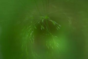 Natuur, meervoudige belichting van Kitty Stevens