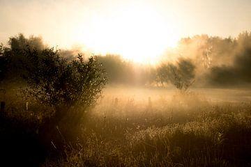Golden sunrays sur