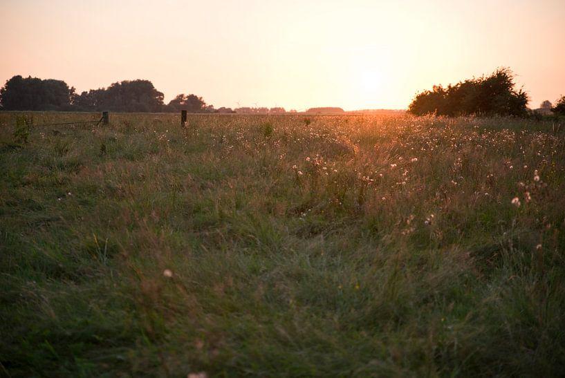 meadow von Mariska Hofman