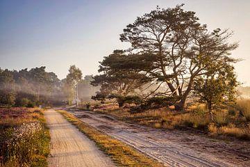 Zonsopkomst op de Strabrechtse Heide van Rob Boon