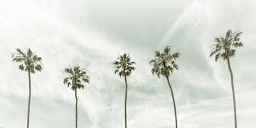Vintage palmidylle | Panorama van Melanie Viola