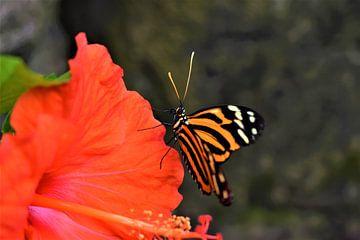 Papillon coloré sur Nikkie Fotografie
