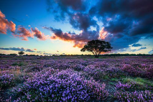 Sonnenuntergang auf dem Moor von Bart Verbrugge