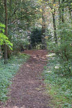 bospad van Bri V beelen