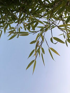 Bambus von Emma Van Leur