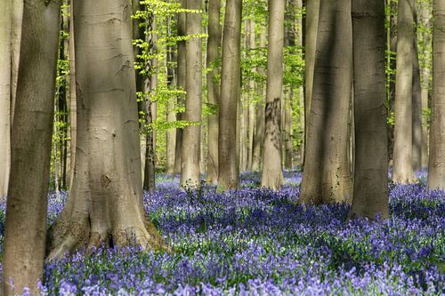 Haller bos van Martin de Bock