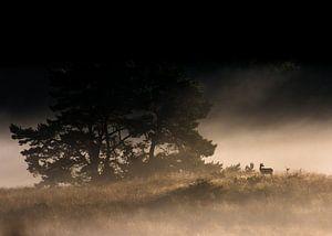 Edelhert bij mistige zonsopkomst