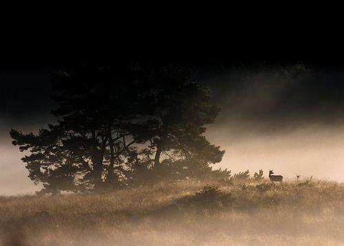 Edelhert bij mistige zonsopkomst van Ronald van Dijk