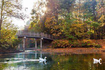Herfst in het Wandelbos in Tilburg van Evelien Oerlemans