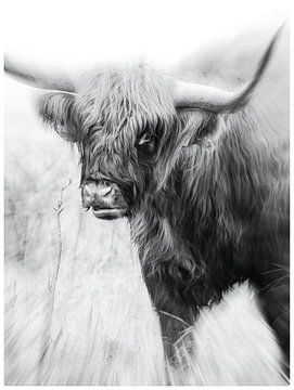 Highlander in Schwarz und Weiß von Mario Dekker