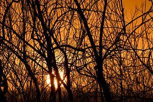 zonsondergang in de Dordsche Biesbosch van Jelle Mijnster