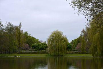 Trauerweide in der Nähe des Teiches im Pioenpark in Groningen