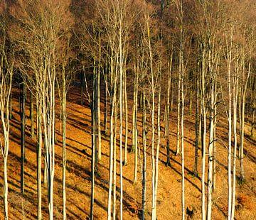 Wald von Vera Laake