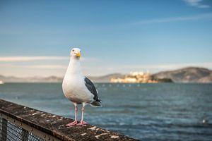 Meeuw in San Francisco vlak voor Alcatraz