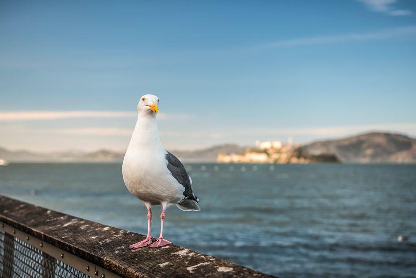 Meeuw in San Francisco vlak voor Alcatraz van Bas Fransen