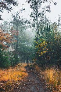 Mist in het bos van Jeroen Brasz