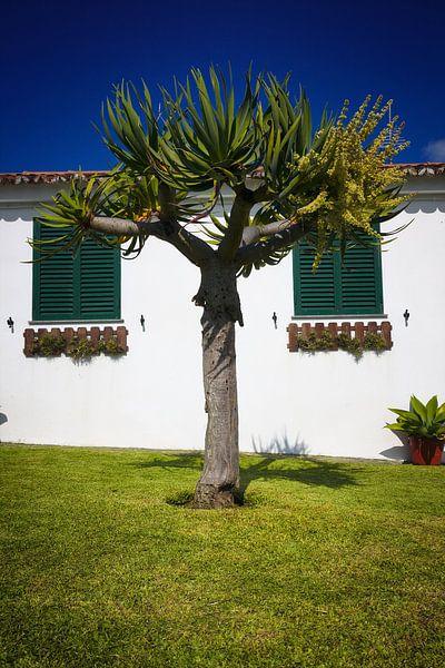 Drachen Baum Garten Haus sur Jan Brons