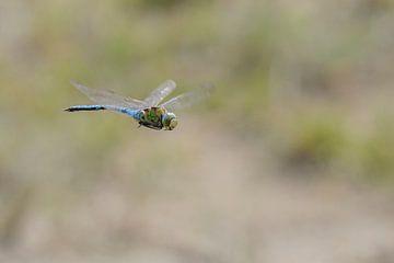 Vliegende Grote Keizerlibel van Marcel  van Rooijen