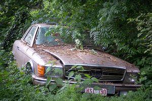 Mercedes in het Bos.