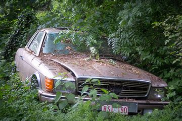 Mercedes in het Bos. van