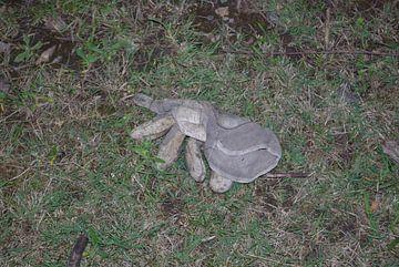 Handschuhe, verloren, vergessen von Norbert Sülzner
