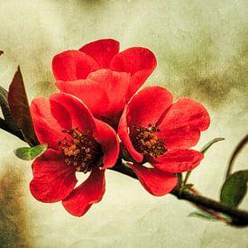 Drei rote Blüten am Zweig von Max Steinwald