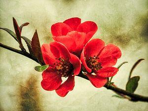 Drei rote Blüten am Zweig