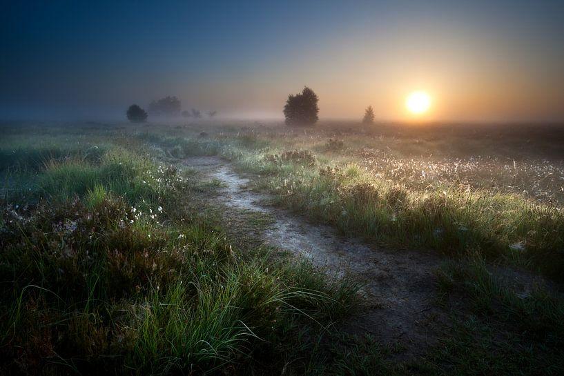 Way to the sun van Olha Rohulya