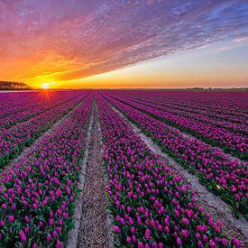 Tulpen op Texel. van Justin Sinner Pictures ( Fotograaf op Texel)