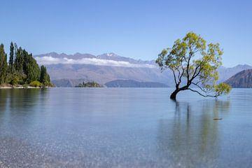 Magische boom, Lake Wanaka von Willem Vernes
