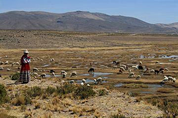 Femme péruvienne avec les lamas et les alpagas sur