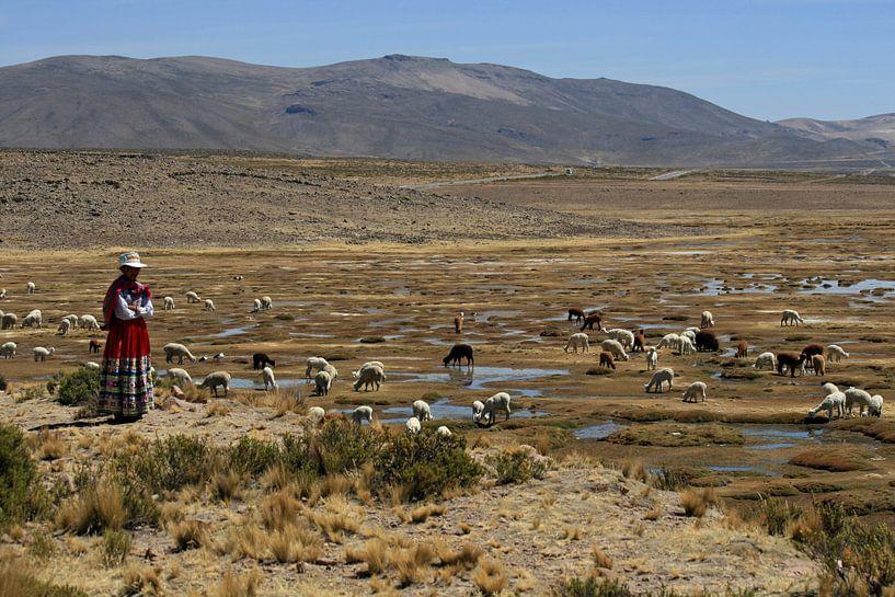 Peruaanse vrouw met lama's en alpaca's van Gert-Jan Siesling
